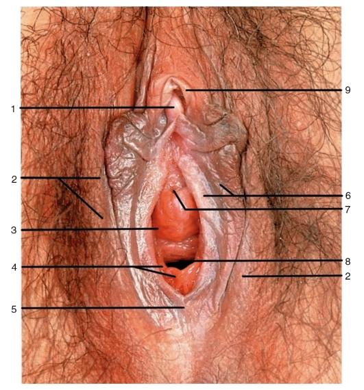 что все фото внутренние половые органы женщины девочка